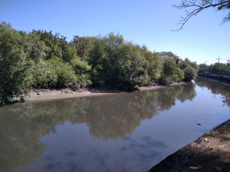 Kawasan Mangrove di Surabaya | Dokumen pribadi