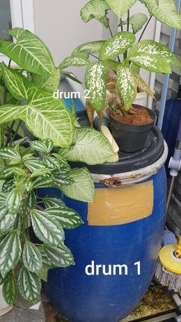 Sistem filter kolam, terdiri dari drum 1 dan drum 2 (Foto : dokpri MomAbel)