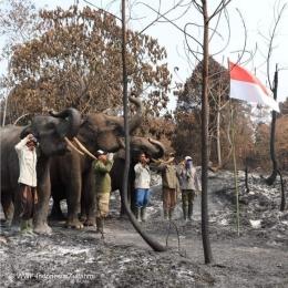Sumber foto WWF Indonesia