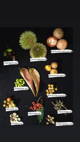 Buah-buahan hutan yang menjadi makanan orangutan. (Foto: Ishma /YP).