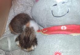 Bayi kucing di hari ke lima tinggal bersama kami, semoga tumbuh sehat (Foto : Martha Weda)