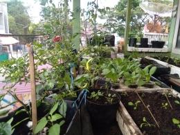 Penampakan beragam jenis tanaman di