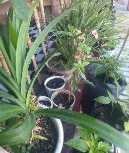 Meracik ekosistem mini di Beranda Rumah (Dokumentasi pribadi Zaldy Chan)