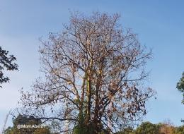 Pohon Kehidupan (Foto ilustrasi: dokpri MomAbel)