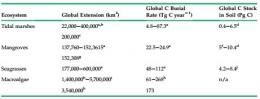 Gambar 3. Potensi penyerapan emisi oleh ekosistem karbon biru (Murray, 2011).