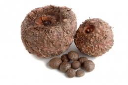 Porang adalah buah dengan jenis umbi-umbian yang memiliki banyak manfaatnya bagi kehidupan manusia, ilustrasi : kompas.com