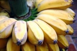 Ilustrasi gambar pisang kepok https://m.mommyasia.id/8444/article/jangan-sampai-salah-beli-ketahui-perbedaan-pisang-kepok-kuning-putih-y