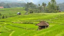 pemandangan sawah yang ada di Desa(sumber: simpeldesa.com)