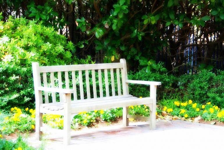 Ilustrasi sebuah bangku taman di bawah pohon Beringin, sumber: Pixabay.com