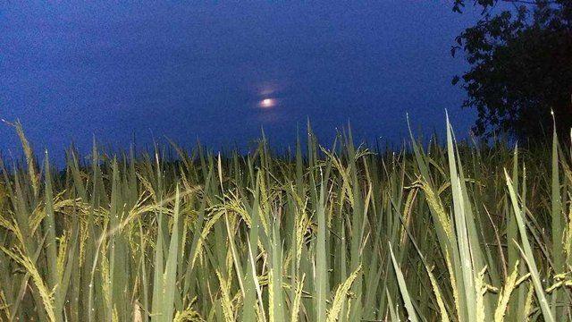 Ilustrasi tepi sawah pada malam hari, sumber: putraadiy via steemit