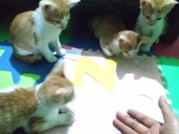 Ilustrasi Anak Kucing Belajar Membaca (Foto: Dokumentasi Pribadi Zaldy Chan)