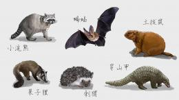 Ilustrasi hewan-hewan pembawa virus SARS-CoV-2 yang menularkan ke manusia. Foto: Lovepik | didesain oleh 30000006721