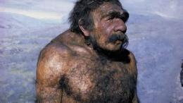 Rekayasa wajah spesies neanderthal jantan (sumber: Tom McHugh---The Field Museum, Chicago/Photo Researchers)