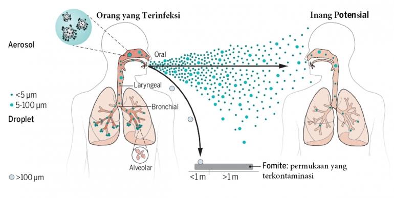 Fase-fase yang terlibat dalam penularan virus pernapasan melalui udara. Diadaptasi dari: Science, Vol. 373, Issue 6558, 27 August 2021, hlm. 981.