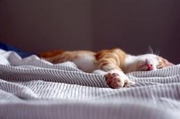 Hewan juga punya empati kedukaan. Mereka merasakan kesedihan yang mendalam saat mengetahui saudaranya sudah tiada (unsplash.com)