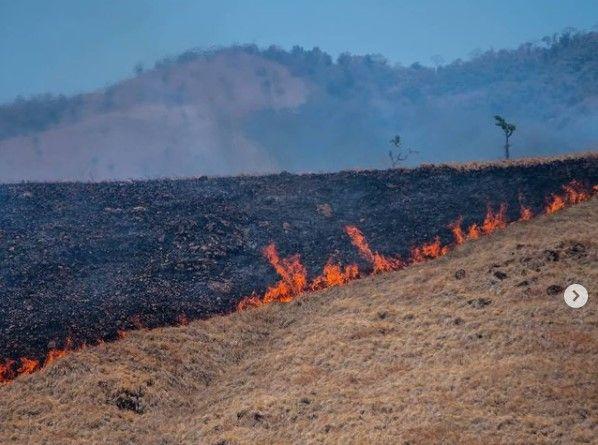 Kebakaran padang savana di Nagekeo, NTT. Foto: Ignas Kunda/Instagram