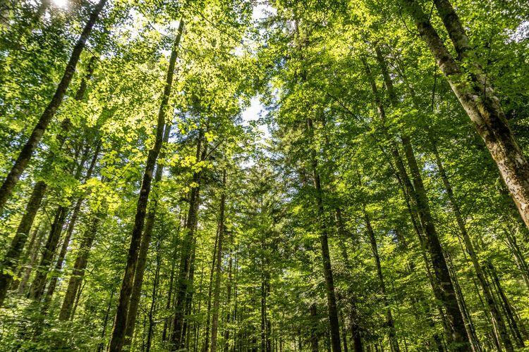 Hutan yang juga disebut alam raya. (Foto : freepik via Kompas).