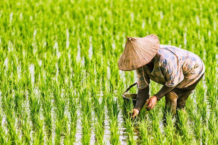 Ilustrasi petani. foto: SHUTTERSTOCK.com/FENLIOQ dipublikasikan kompas.com