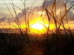 Ilustrasi matahari, sumber: Pixabay