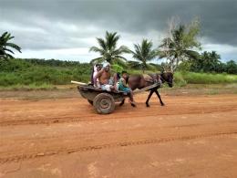 Kuda di Desa Bersehati, penduduk trans dari NTT (Marahalim Siagian)
