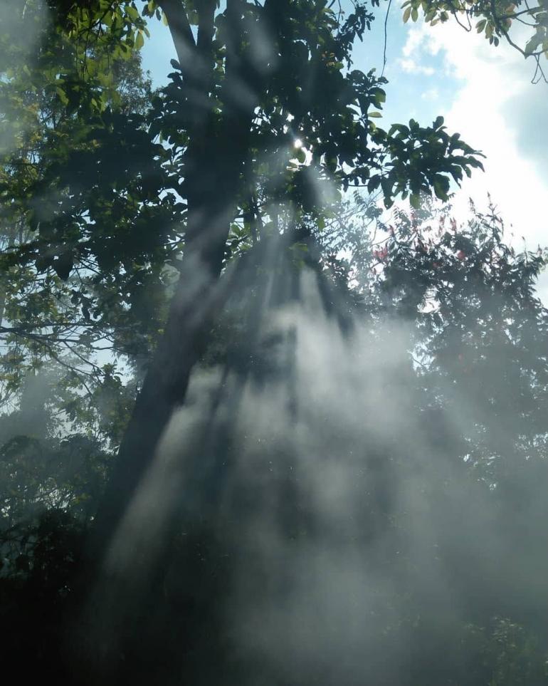 Asap menghamburkan berkas sinar matahari di sela pepohonan (Dok. Pribadi)