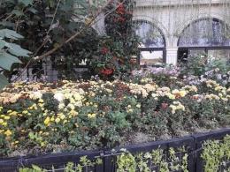 Taman bunga krisan di Lembang. Dokpri