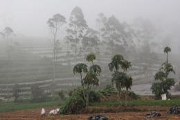 Wilayah Perkebunan bekas Dusun Legetang (dokpri)
