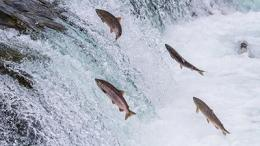 Illustrasi. www.dunia-perairan.com