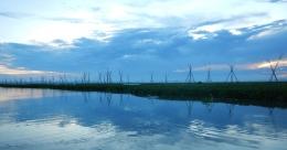 Kumpulan eceng gondok yang terhalang tiang-tiang bambu penahan pergerakannya di Danau Tempe. (@Hanom Bashari)