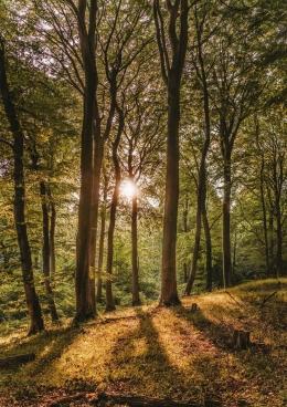 Hutan   Sumber : www.pexels.com