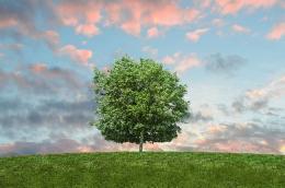 Ilustrasi www.piqsels.com