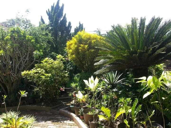Dokpri. Koleksi tanaman di halaman depan rumah