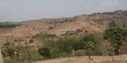 Gunung menjadi gundul, dan beralih fungsi menjadi lahan pertanian | ilustrasi : merdeka.com
