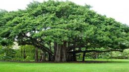 Ilustrasi pohon lebat, sumber: Okezone via goodnewsfromIndonesia.id