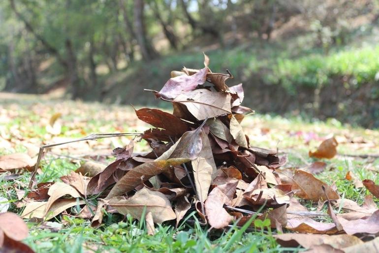 Ilustrasi daun kering Sanam Maharjan/Pixabay.com