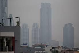 sumber : reuters.com (Tampak Tanaman di Atas Atap Tumbuh di Tengah Kabut Polusi yang Tebal)