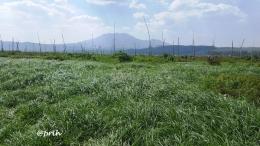 Padang rumput menghijau Rawa Pening (dokpri)