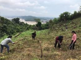 Pembersihan lahan dan penanaman Buah-buahan oleh mahasiswa. Dok Pribadi