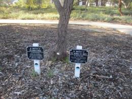 Pohon ditanam oleh keluarga pahlawan (Dok Pribadi)