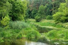 Lingkungan harmoni bebas Polusi ( piqsel.com )