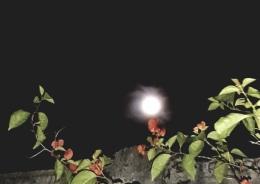 Bulan di Atas Bougenville. (Foto: Pribadi)