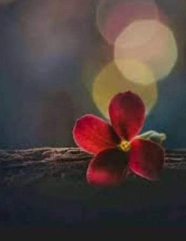 Ilustrasi bunga (dok.twitter/@imot2s