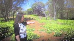 Bunga di Bushland Garden (Dok Pribadi)