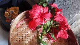 Bunga Sepatu (Hibiscus rosa-sinensis)   dokpri