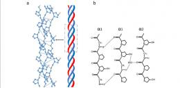 Struktur triple helix kolagen. Sumberl Xiaoxia Zhang et al (2020)