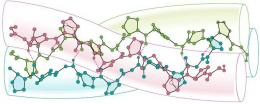Struktur Triple helix kolagen. Sumber: Pinterest.
