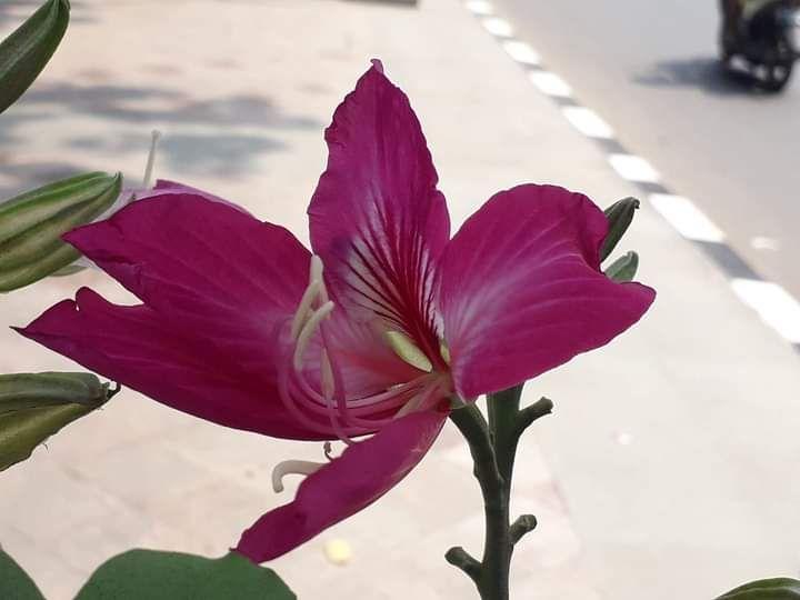 Dokpri. Bunga di tepian jalan kota Jakarta