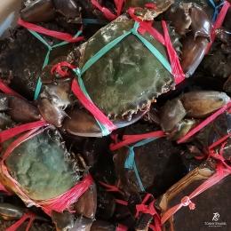 Kepiting di Pasar Ikan Grosir Muara Angke. Sumber: dokumentasi pribadi