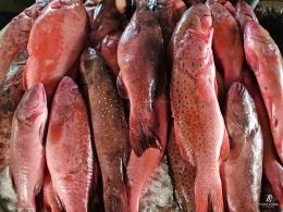 Kerapu Lodi yang termasuk ikan laris. Sumber: dokumentasi pribadi