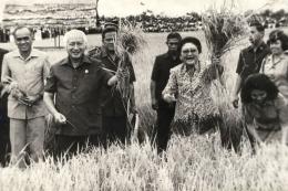 Presiden Soeharto dan Ibu Tien sedang melakukan panen beras di sebuah acara panen raya. (Sumber : kompas.com)